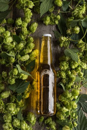 top view of beer in bottle in green hop on wooden background Stock Photo