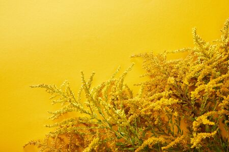 top view of goldenrod bunches on yellow background