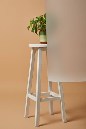 flowerpot with plant on bar stool behind matt glass on beige