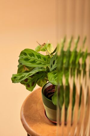 selective focus of green plant in flowerpot on wooden stool isolated on beige behind reed glass