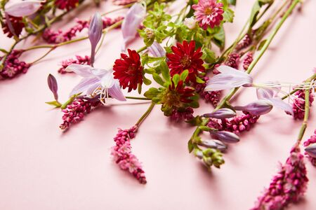 close up view of diverse wildflowers on pink background