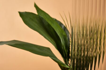 selective focus of reed glass in front of big green leaves isolated on beige 版權商用圖片
