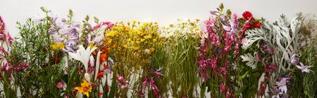 panoramic shot of bunches of diverse wildflowers on white background Imagens
