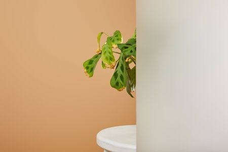 leaves of plant in pot behind matt glass on white stool isolated on beige