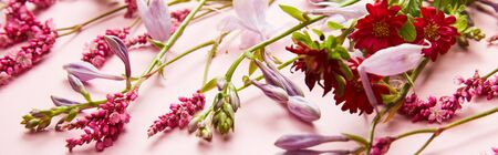 panoramic shot of fresh wildflowers on pink background