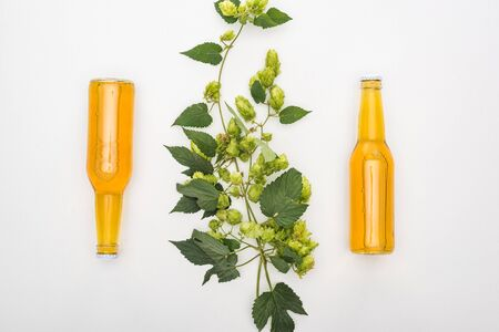 top view of ale in bottles with green hop on white background Stock Photo