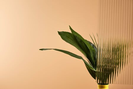 plant with big leaves in yellow vase isolated on beige 版權商用圖片