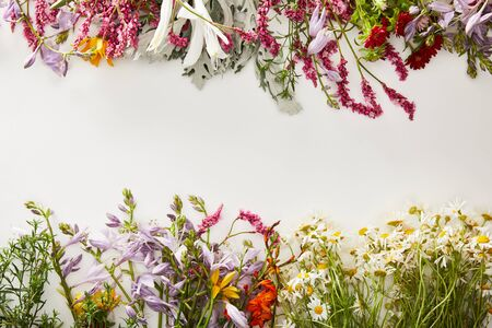 top view of fresh wildflowers on white background