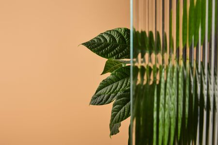 leaves in shadow behind reed glass isolated on beige