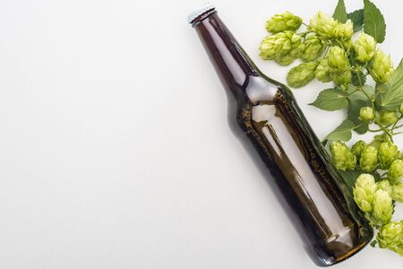 top view of beer with green hop on white background Stock Photo