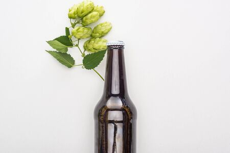 top view of beer in brown bottle with green hop on white background