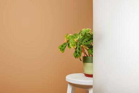 green plant in flowerpot behind matt glass