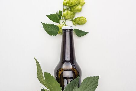top view of beer in bottle with green hop and leaves on white background Stock Photo