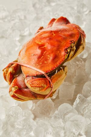 frozen uncooked tied up crab on ice cubes