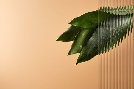 dark green leaves behind reed glass isolated on beige