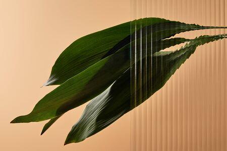 green leaves isolated on beige behind reed glass 版權商用圖片