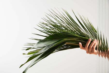 cropped view of woman holding palm tree and big green leaves on white background behind reed glass