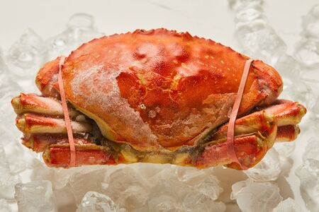 frozen raw tied up crab with solid shell on ice cubes on white Stock Photo