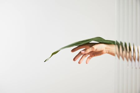 cropped view of woman holding green leaf on white behind reed glass
