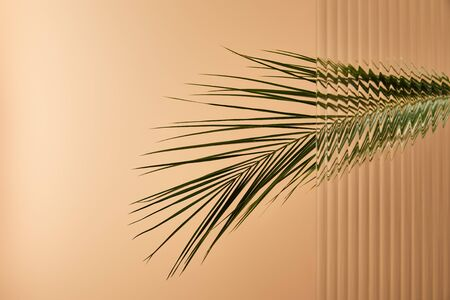 palm tree leaf isolated on beige behind reed glass