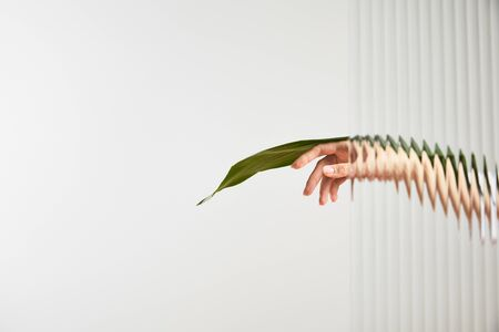 cropped view of woman holding green leaf on white background behind reed glass