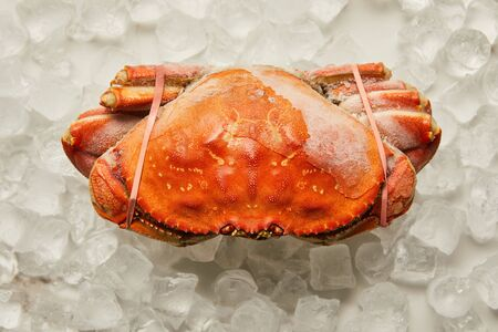 top view of frozen uncooked tied up crab on ice cubes on white