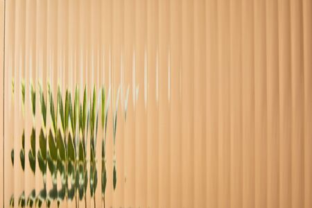 blurred view of green plant behind reed glass isolated on beige 版權商用圖片
