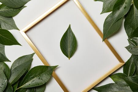 empty golden frame on white background with copy space and green leaves 写真素材