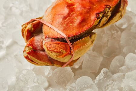 frozen raw, uncooked tied up crab on ice cubes on white