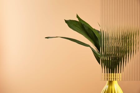 green leaves of plant in yellow pot behind reed glass isolated on beige 版權商用圖片