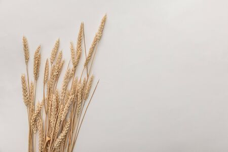 top view of wheat spikes isolated on white Stock Photo
