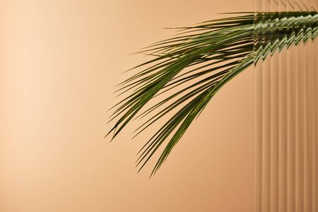 palm tree leaves isolated on beige behind reed glass