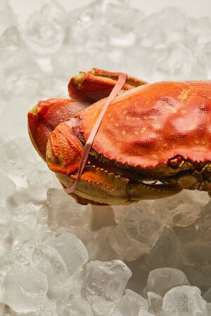 frozen raw tied up crab on ice cubes on white Stock Photo