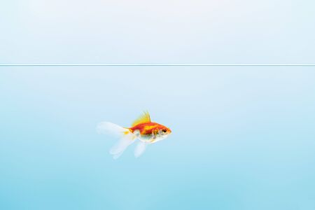transparent pure calm water with goldfish on blue background Stockfoto