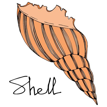 Vector Summer beach seashell tropical elements. Black and white engraved ink art. Isolated shell illustration element on white background. Çizim
