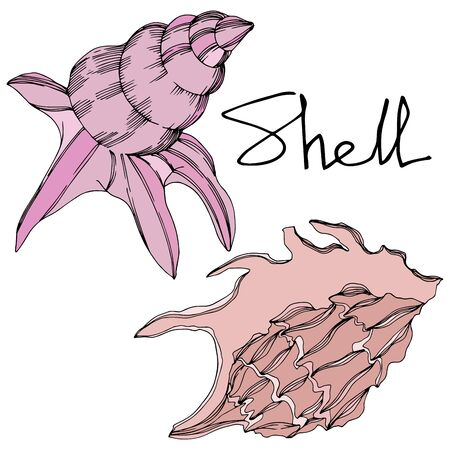 Vector Summer beach seashell tropical elements. Black and white engraved ink art. Isolated shell illustration element on white background. Illustration