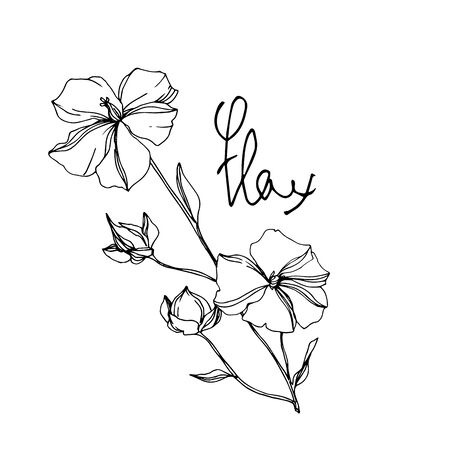 Vector Flax floral botanical flowers. Wild spring leaf wildflower isolated. Black and white engraved ink art. Isolated flax illustration element on white background.