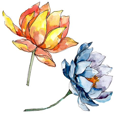 Lotus floral botanical flowers. Wild spring leaf wildflower isolated.  background illustration set. Watercolour drawing fashion aquarelle isolated. Isolated nelumbo illustration element.