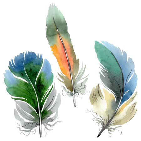 Colorful bird feather from wing isolated.  background illustration set. Watercolour drawing fashion aquarelle isolated. Isolated feather illustration element. Reklamní fotografie