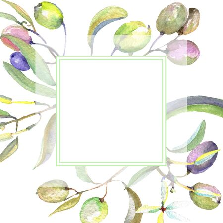 Olive branch with black and green fruit.  background illustration set. Watercolour drawing fashion aquarelle isolated. Frame border ornament square.