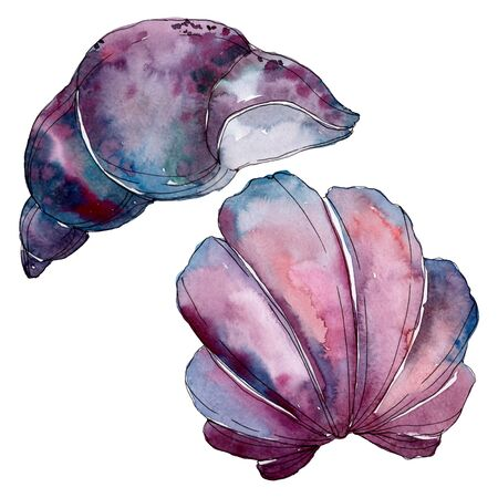 Summer beach seashell tropical elements.  background illustration set. Watercolour drawing fashion aquarelle isolated. Isolated shell illustration element.