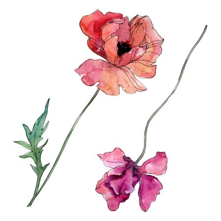 Poppy floral botanical flower. Wild spring leaf wildflower isolated.  background illustration set. Watercolour drawing fashion aquarelle isolated. Isolated poppies illustration element.