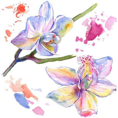 Orchid floral botanical flowers. Wild spring leaf wildflower isolated.  background illustration set. Watercolour drawing fashion aquarelle isolated. Isolated orchids illustration element.