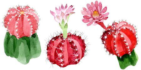 Cactus floral botanical flowers. Wild spring leaf wildflower isolated.  background illustration set