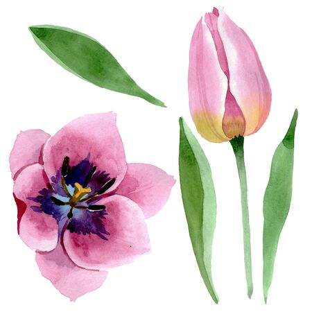 Pink tulips floral botanical flowers. Wild spring leaf wildflower isolated.  background set. Watercolour drawing fashion aquarelle. Isolated tulips illustration element.
