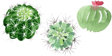 Green cactus floral botanical flowers. Wild spring leaf wildflower isolated.  background illustration set. Watercolour drawing fashion aquarelle. Isolated cacti illustration element. Stock Photo