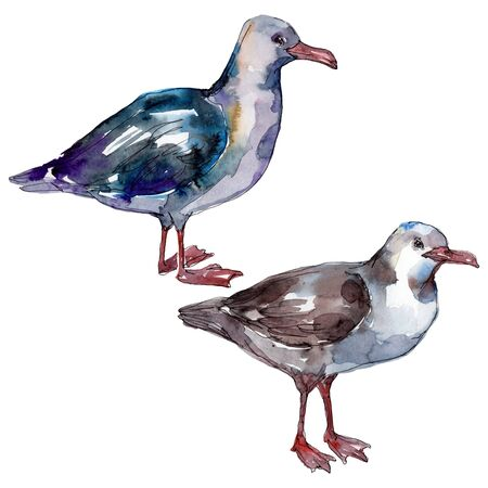 Sky bird seagull in a wildlife. Wild freedom, bird with a flying wings.  background illustration set. Watercolour drawing fashion aquarelle. Isolated gull illustration element.