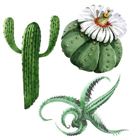 Green cactus floral botanical flower. Wild spring wildflower isolated. Watercolor background illustration set. Watercolour drawing fashion aquarelle isolated. Isolated cacti illustration element.