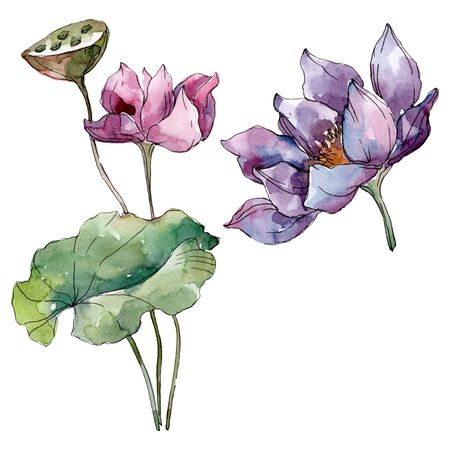 Lotus floral botanical flowers. Wild spring leaf wildflower isolated.  background illustration set. Watercolour drawing fashion aquarelle isolated. Isolated lotus illustration element. Stock Photo