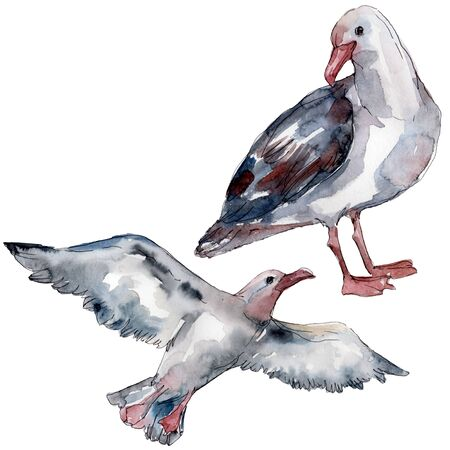 Sky bird seagull in a wildlife. Wild freedom, bird with a flying wings.  background illustration set. Watercolour drawing fashion aquarelle isolated. Isolated gull illustration element.